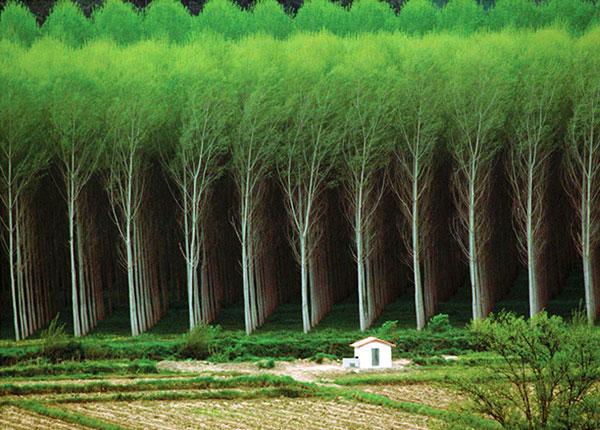 کاغذ؛ دوستدار محیط زیست